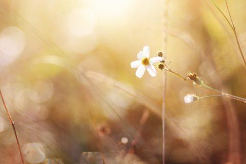 beautiful-bloming-red-wild-flowers-fields-springtime-natural-sunlight-shining-mountain_36615-480